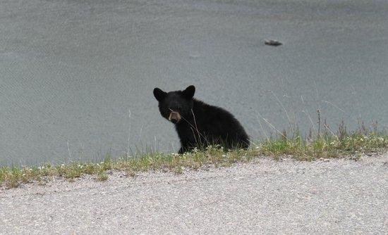 Alpine Village Cabin Resort - Jasper: Little guy on side of road