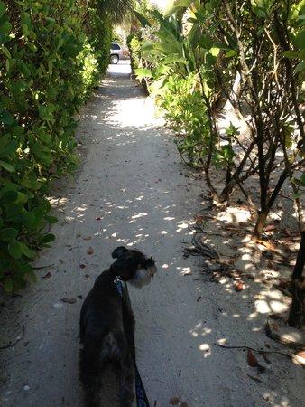 #1 Island Hideaway: Private walkway to beach from Island Hideaway
