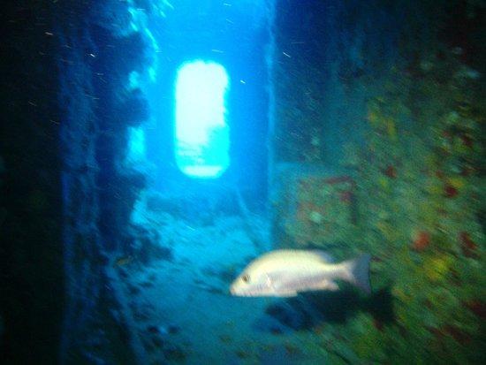 Silent World Dive Center: Speigle Grove