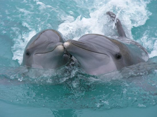Dolphinaris Cozumel: showing off