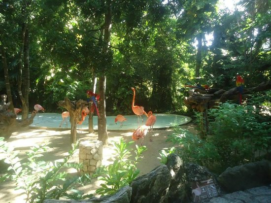 Xcaret Eco Theme Park: Flamingos na entrada do parque