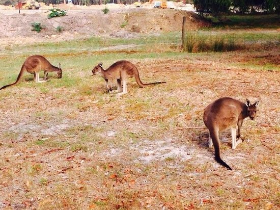 Broadwater Par 3 Golf Course: The Roos!