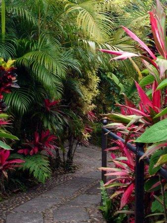Arenal Kioro Suites & Spa: Beautiful grounds