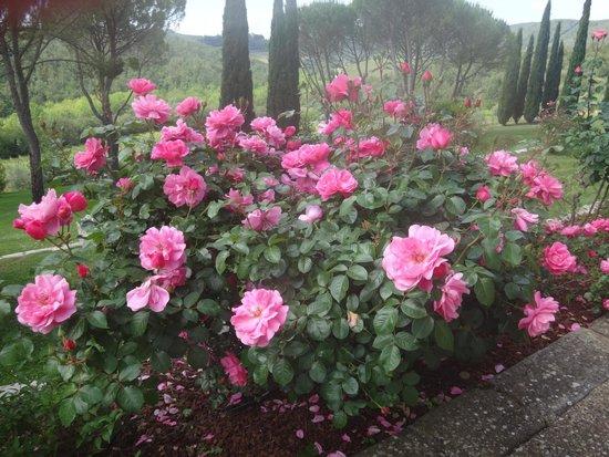 Castello di Spaltenna Exclusive Tuscan Resort & Spa: розы