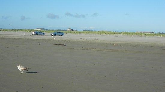 Shilo Inn Suites - Ocean Shores: Car beach.