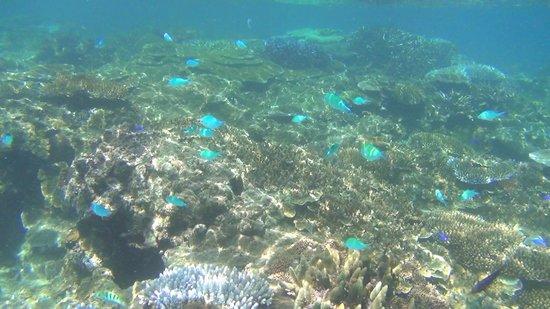 Octopus Resort: resort reefs