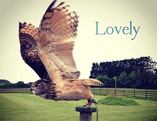 World of Country Life : Echo the Eagle Owl. Amazing display!