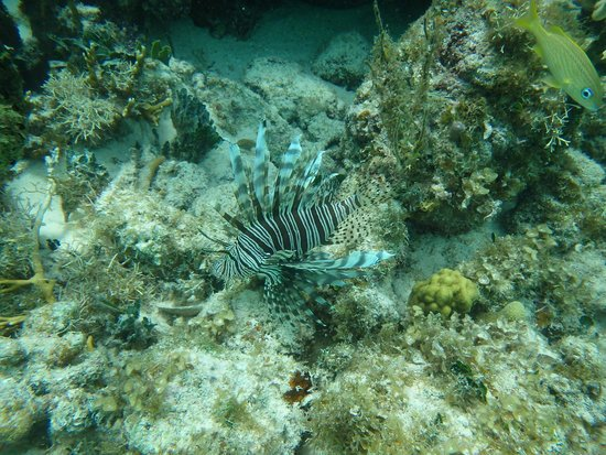 Seven Seas Charters Day Tours: Tiger fish