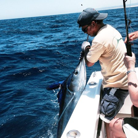 ABY Charters : Pulling in a striped marlin