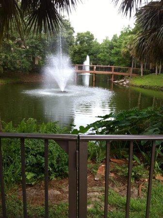 Sheraton Vistana Resort - Lake Buena Vista: Imagem da parte interna e caminho para a piscina.