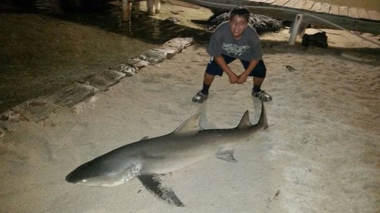 Edgewater Lodge : ShArk caught right off the dock
