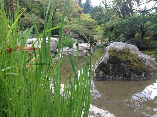 Seattle Japanese Garden: Pond