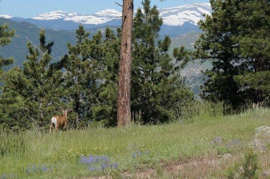 Flagstaff Mountain : Elk?