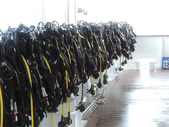 Reef Encounter: Dive gear ready to go