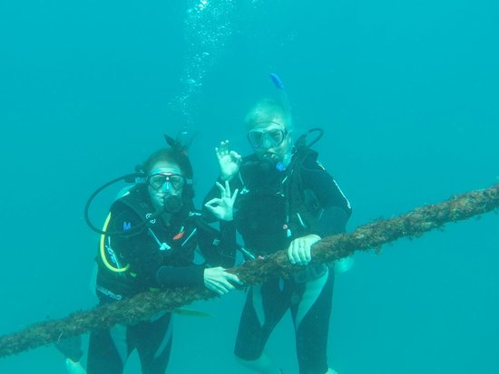 Reef Experience : Diving
