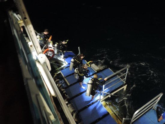 Reef Experience : Night diving