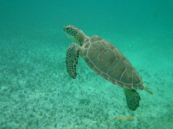 Catalonia Riviera Maya: Snorkeling at Akumal