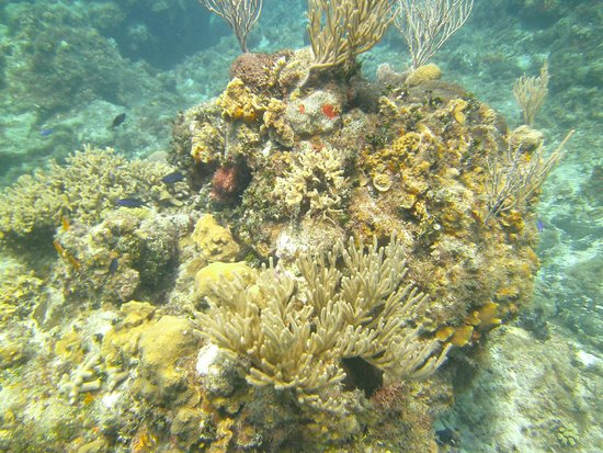 Studio Blue Dive Center : Antes de la inmersion