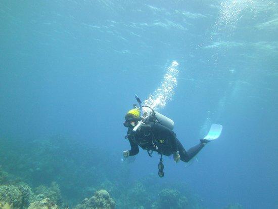 Studio Blue Dive Center : Buceo