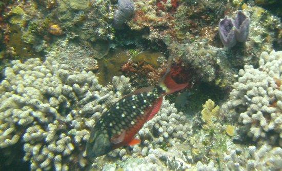 Studio Blue Dive Center : Corales