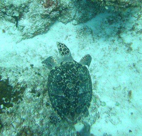 Studio Blue Dive Center : Tortuga