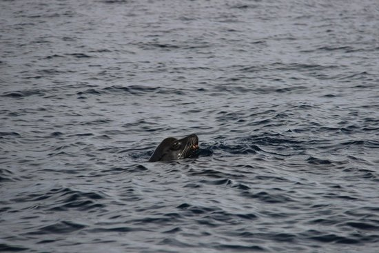 Catalina Coastal Tours & Fishing: Papa sea lion scolding the complainers from the water.