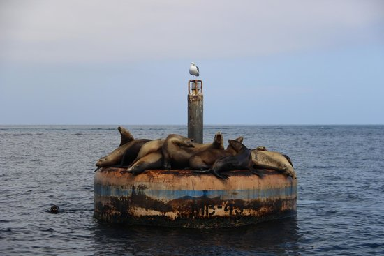 Catalina Coastal Tours & Fishing: Many sea lions complained when one shifted sides.