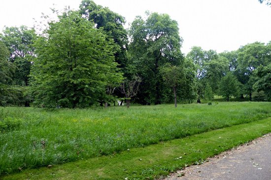 Green Park: A bit like entering a countryside