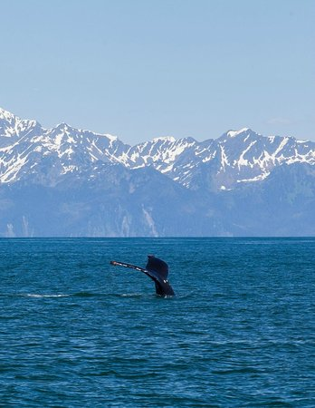Kenai Fjords Glacier Lodge : Spectacular wildlife sightings on way to lodge.