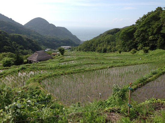 Kumomi, Ishibu, Iwachi, Matsuzaki Beach: 棚田の向こうに海が見えます