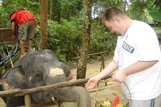 Siam Safari : Hand feeding the elephant you get to ride on