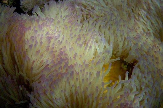 Charm Churee Villa: ภาพถ่ายใต้น้ำของอ่าวจันทร์สม หาดส่วนตัวของจามจุรี วิลล่า