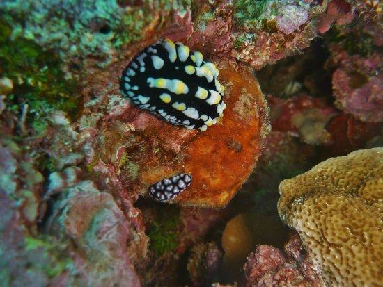 Nautilus Scuba: Nudibranch