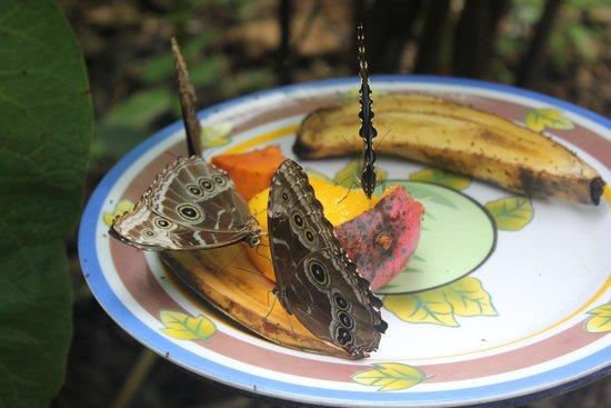 Butterfly Cafe: butterflies instead garden next door