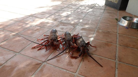Waiwurrie Coastal Farm Lodge: crayfish