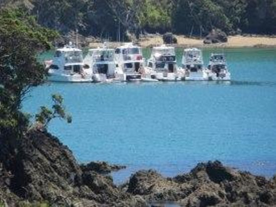 Waiwurrie Coastal Farm Lodge : boats in the bay