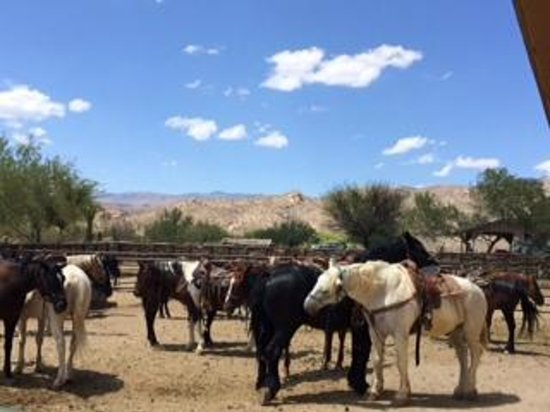 Tanque Verde Ranch: Horses