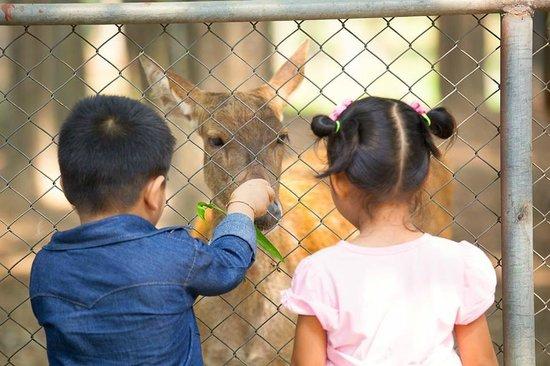 Horizon Village and Resort : Zoo