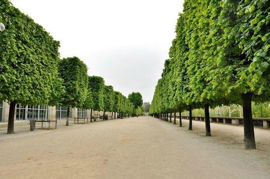 Carousel picture of jardin des tuileries paris for Jardin de tuileries