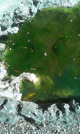 Hotel Restaurant Les Cedres : Fishes