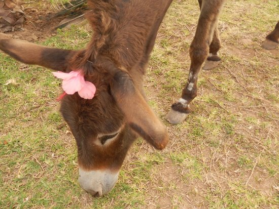 Fawakay Villas: Doris the Donkey in her wedding finery