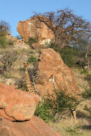 Mopane Bush Lodge: Mapungubwe