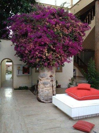 Puding Marina Residence: вид из гамака
