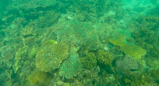 Gaya Island Resort: Beautiful marine life caught while snorkerling