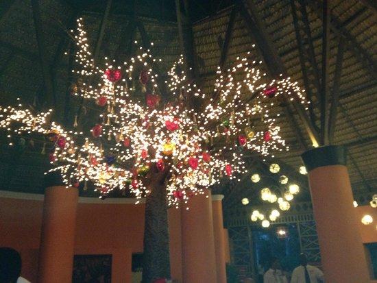 Dreams La Romana : Giant Manzanita Tree at the Mexican