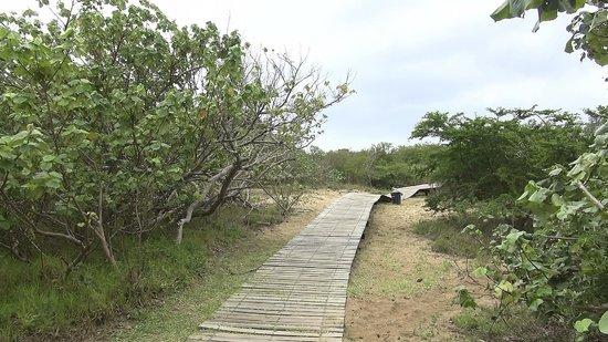 Saint Lucia Estuary (10)