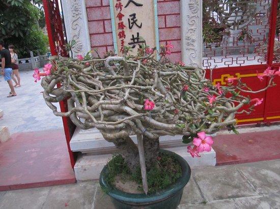 Fukian Assembly Hall (Phuc Kien): Exquisite plants