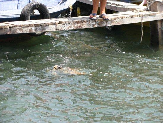 Dalyan River: Sköldpadda