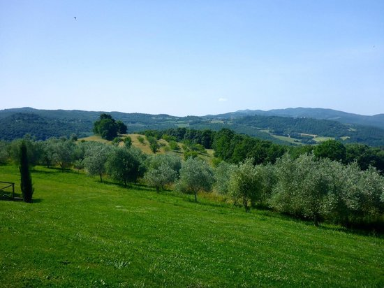 Tenuta di Canonica : Gorgeous views