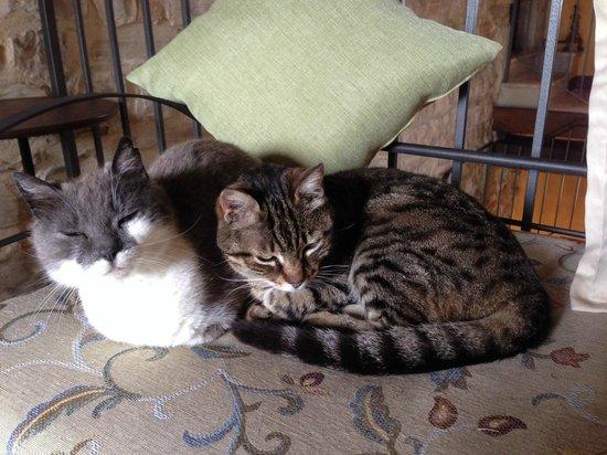 Tenuta di Canonica : the resident cats!! So friendly